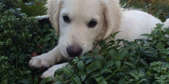 Sundhedsundersøgelser, Hund og Kat